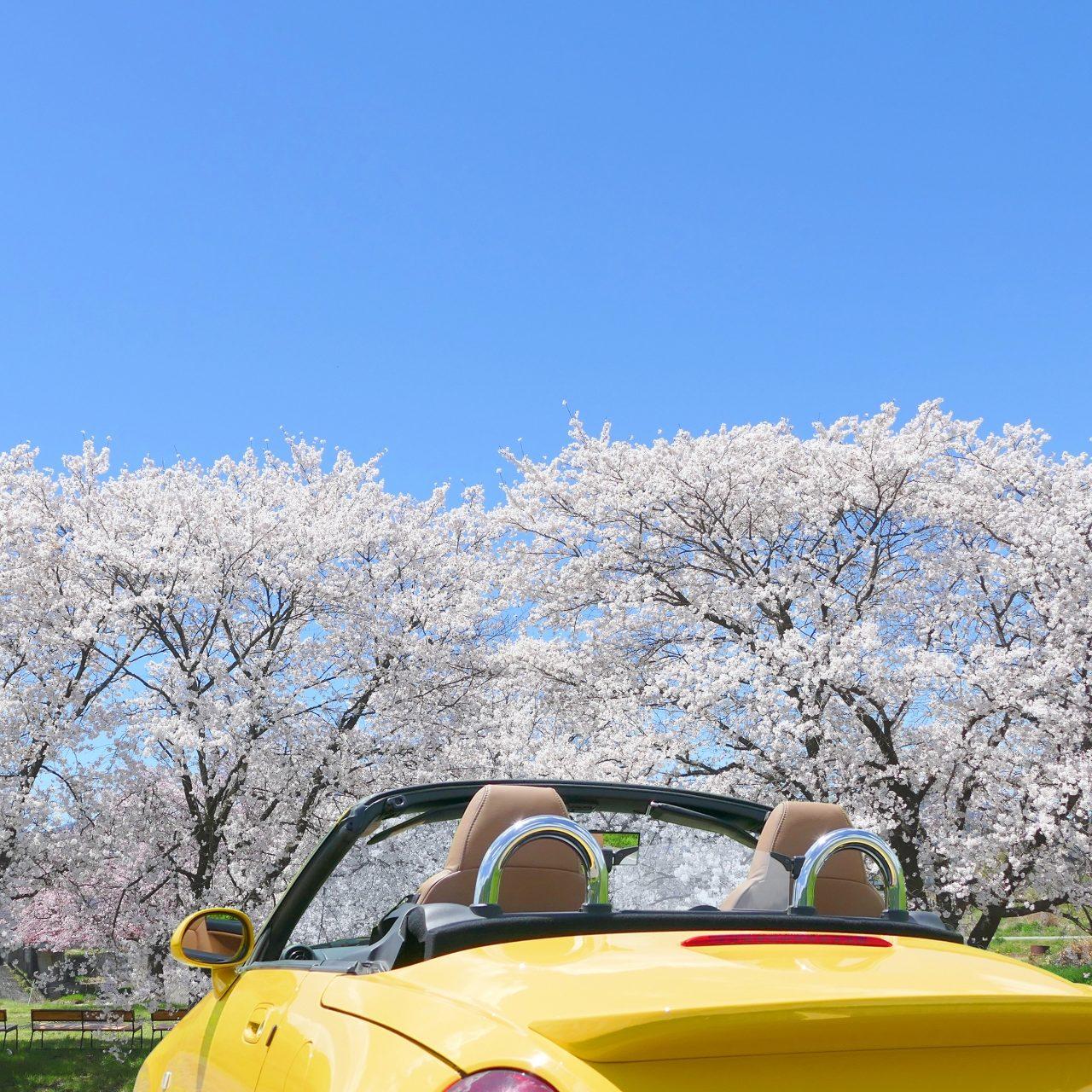 sakura-top-image